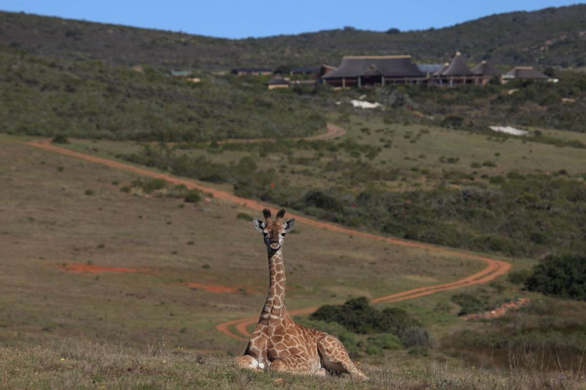 Garden Route Game Lodge | accommodation24.com